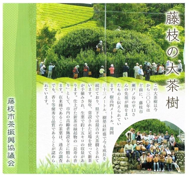大茶樹カタログ